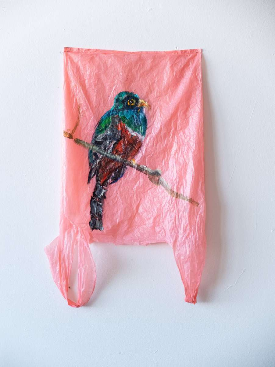 1 Plastic Bag Rosa Trogon Painting Sad M