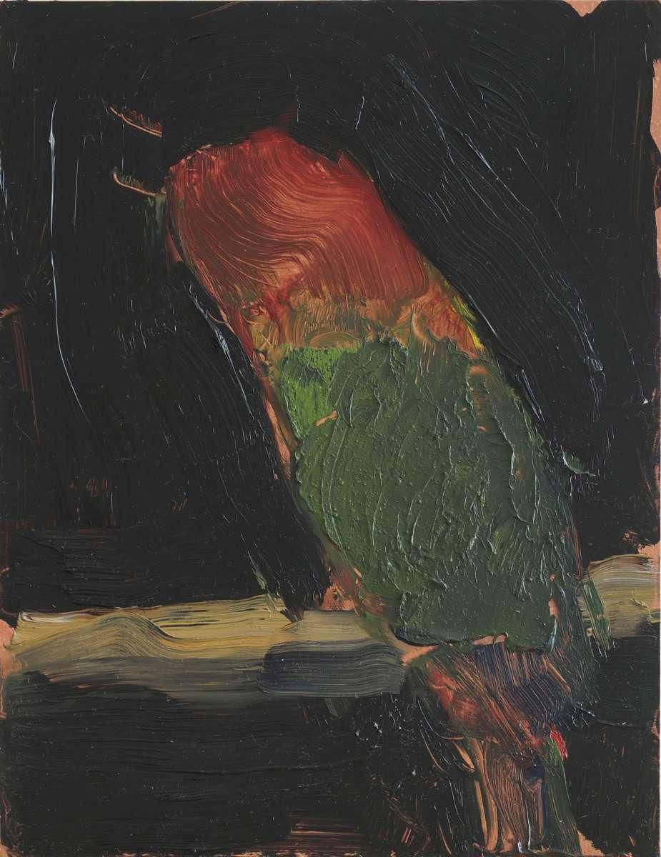 V Papagei Dscf2571