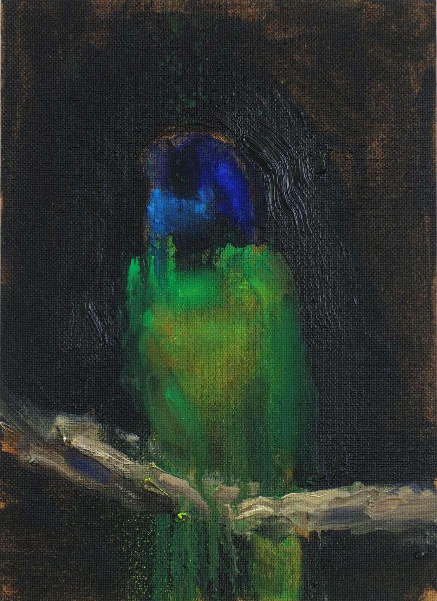 B A Papagei Dscf2581